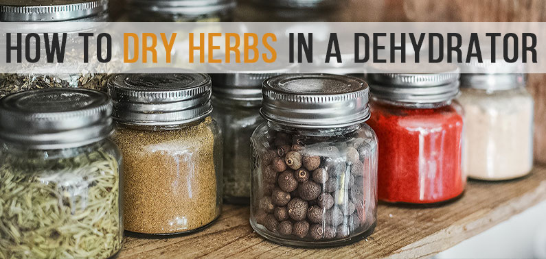 Drying Herbs in a Dehydrator (Quick Guide)