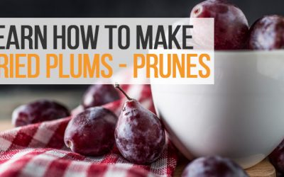 Learn How to Make Dried Plums Using Food Dehydrator