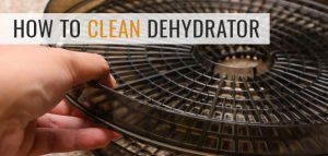 How to Clean and Maintain Your Dehydrator
